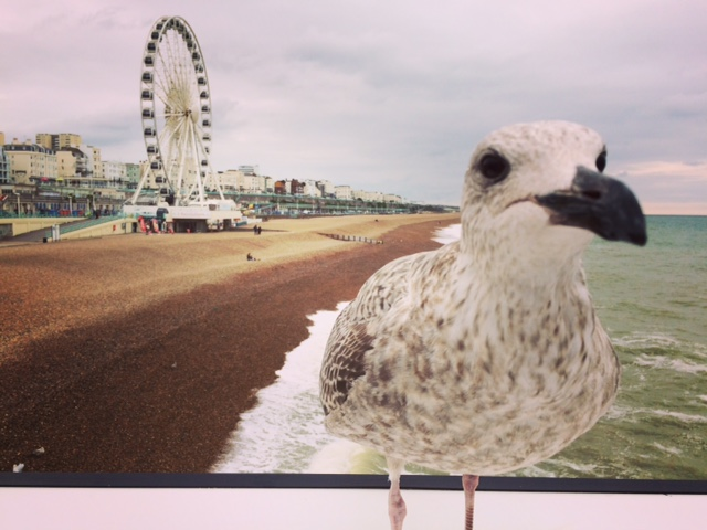 Seagull with Brighton Wheel