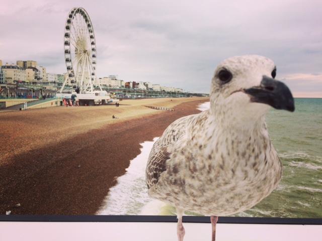 Seagull with Brighton Wheel